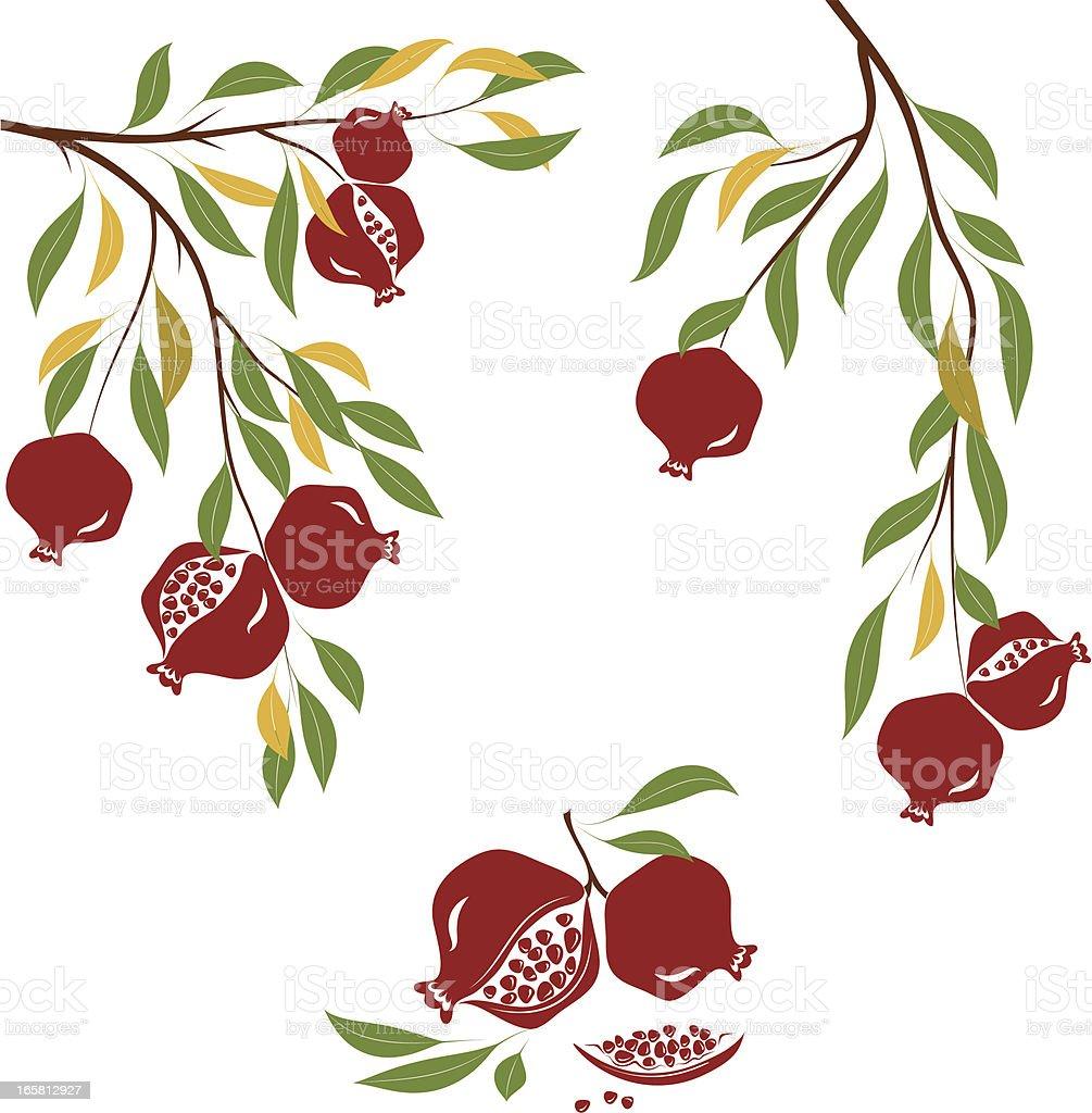 An illustration of a pomegranate tree vector art illustration