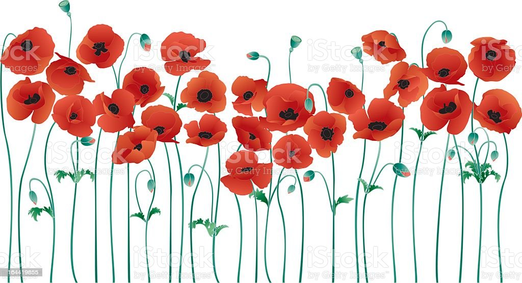 An illustration of a row of poppies vector art illustration