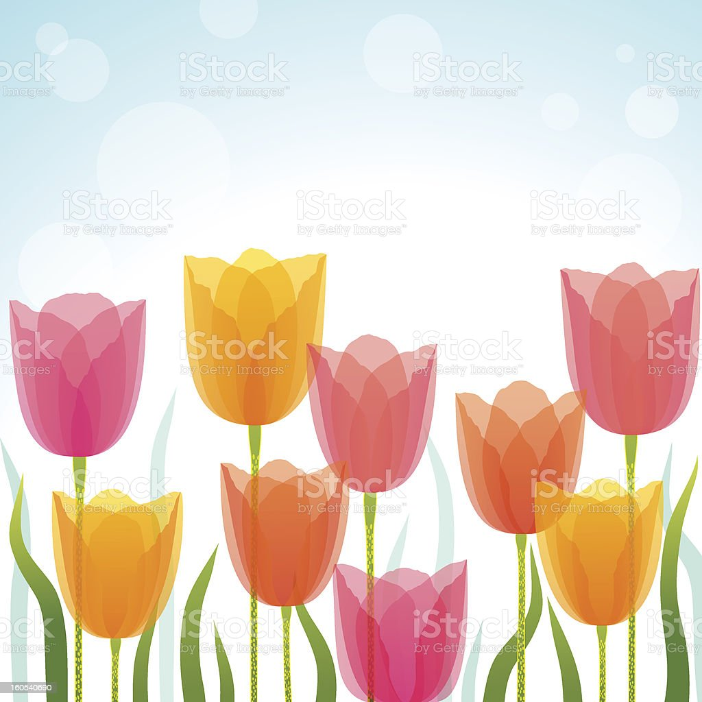 An illustration of a tulip background royalty-free stock vector art