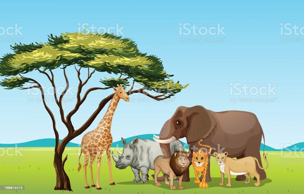 An illustration of cartoon zoo animals vector art illustration