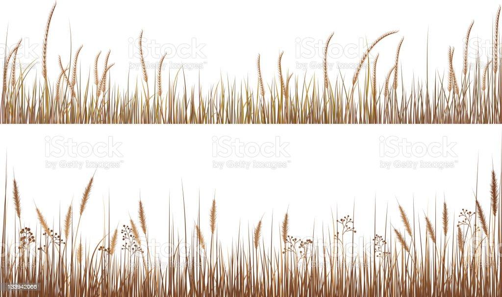 An illustration of dry grasses vector art illustration