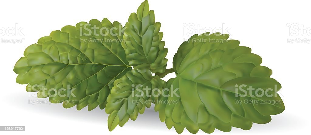 An illustration of fresh mint leaves royalty-free stock vector art