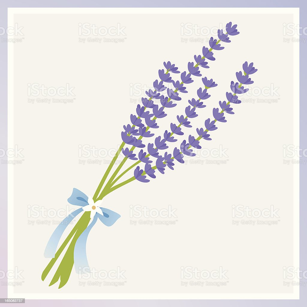 An illustration of lavender flowers tied with a bow vector art illustration