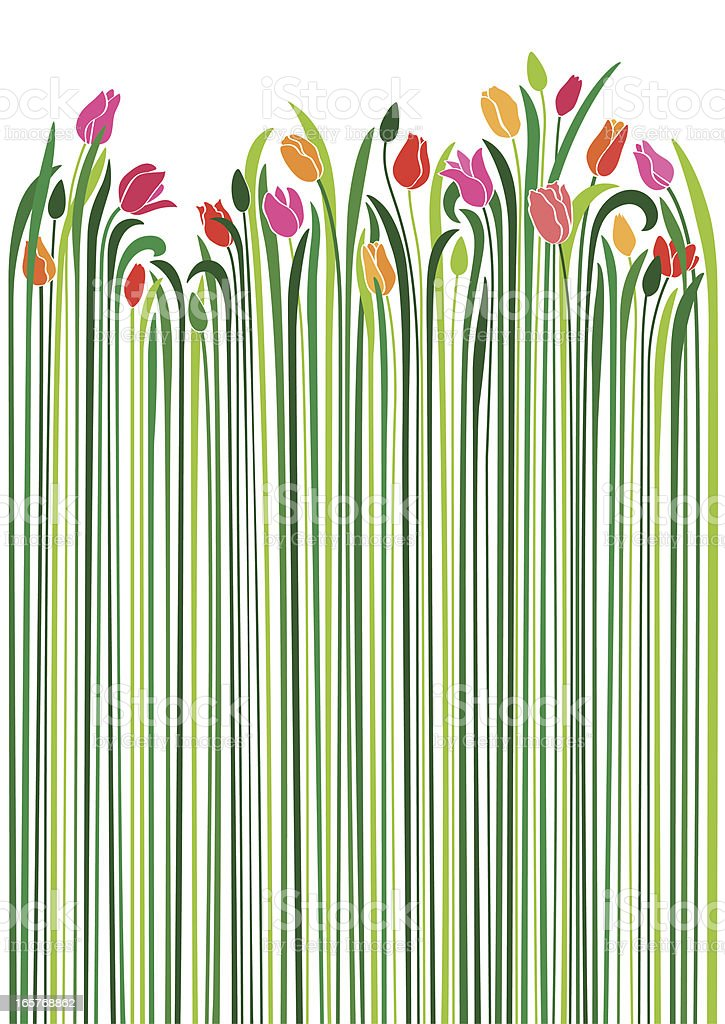 An illustration of tulips with very long green stems vector art illustration