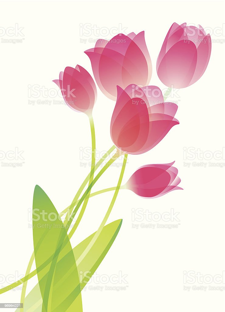 An illustration of watercolor tulips vector art illustration