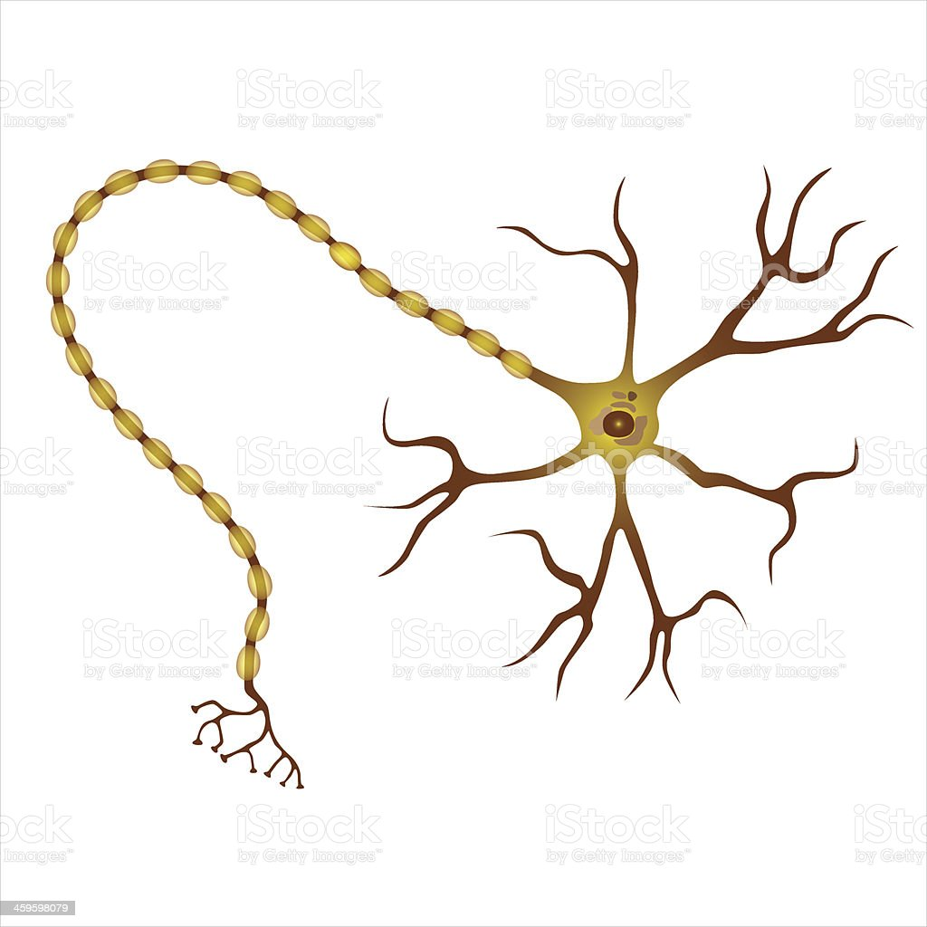 An illustration of what a neuron looks like royalty-free stock vector art