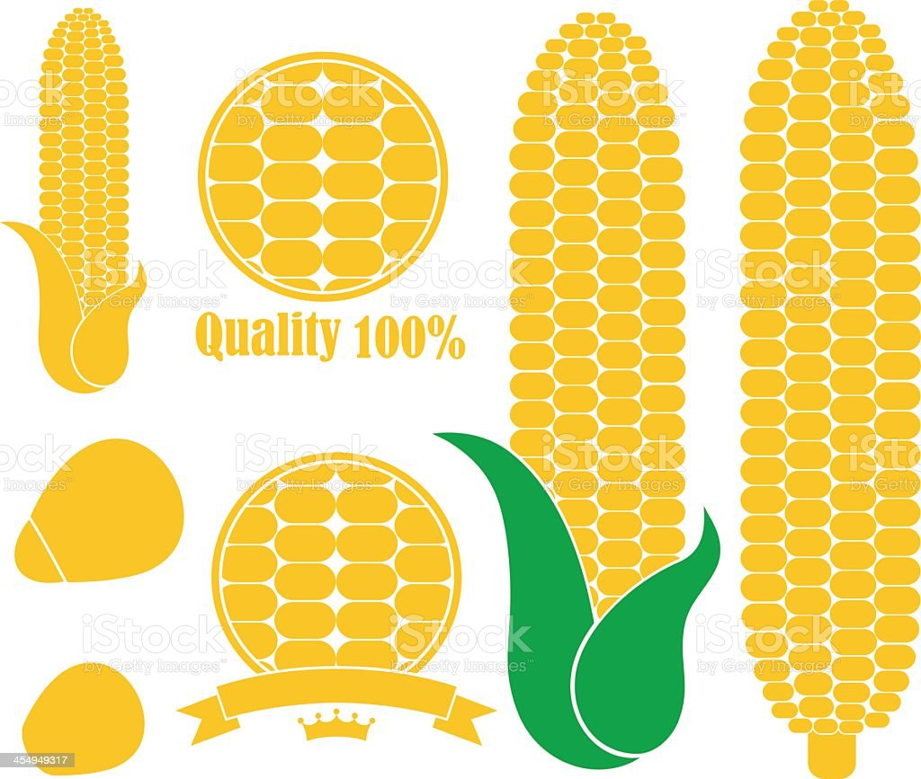 An illustration of yellow corn in white background vector art illustration