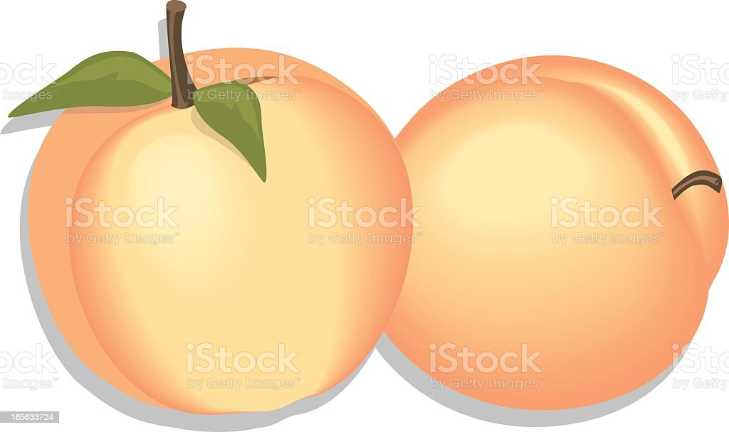 An image of two peaches on a white background royalty-free stock vector art