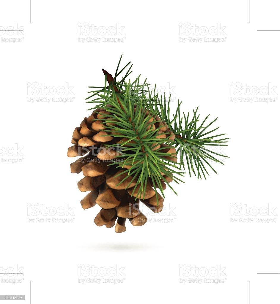 An isolated pine cone with branch vector art illustration