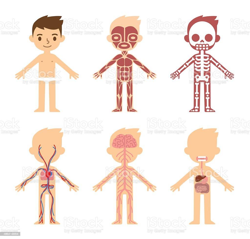 Anatomy chart for kids vector art illustration