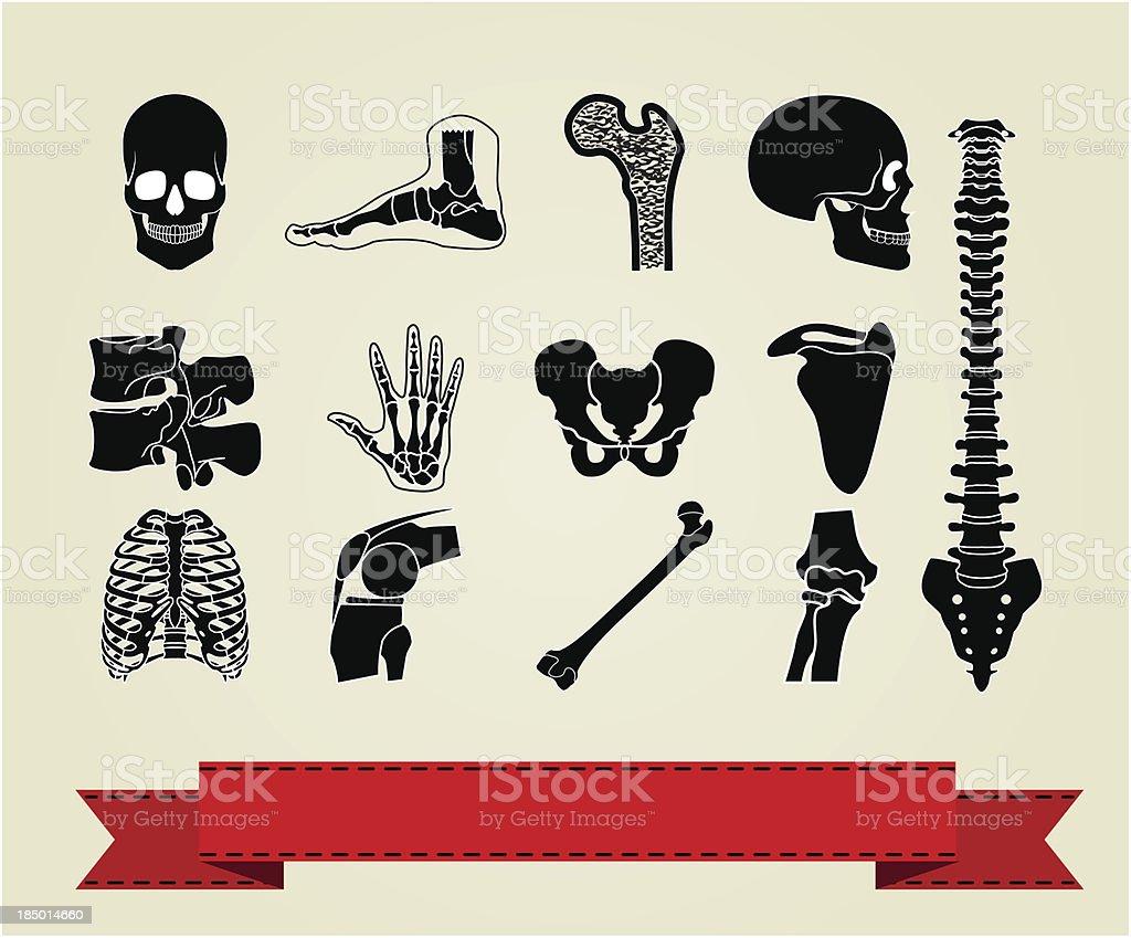 Anatomy icons set 2 vector art illustration