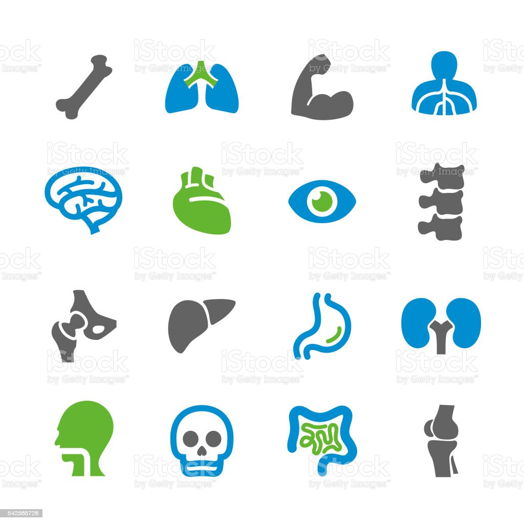 Anatomy Icons - Spry Series vector art illustration