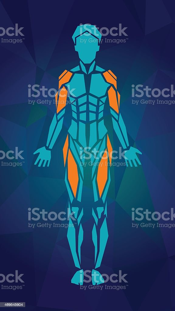 Anatomy of female muscular system, FRONT view. vector art illustration