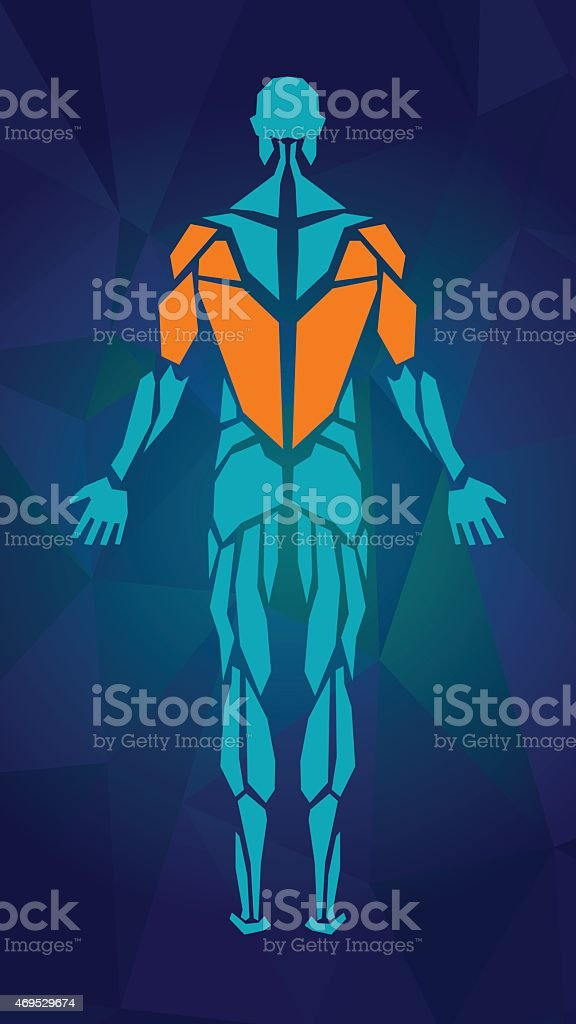 Anatomy of male muscular system, BACK view. vector art illustration