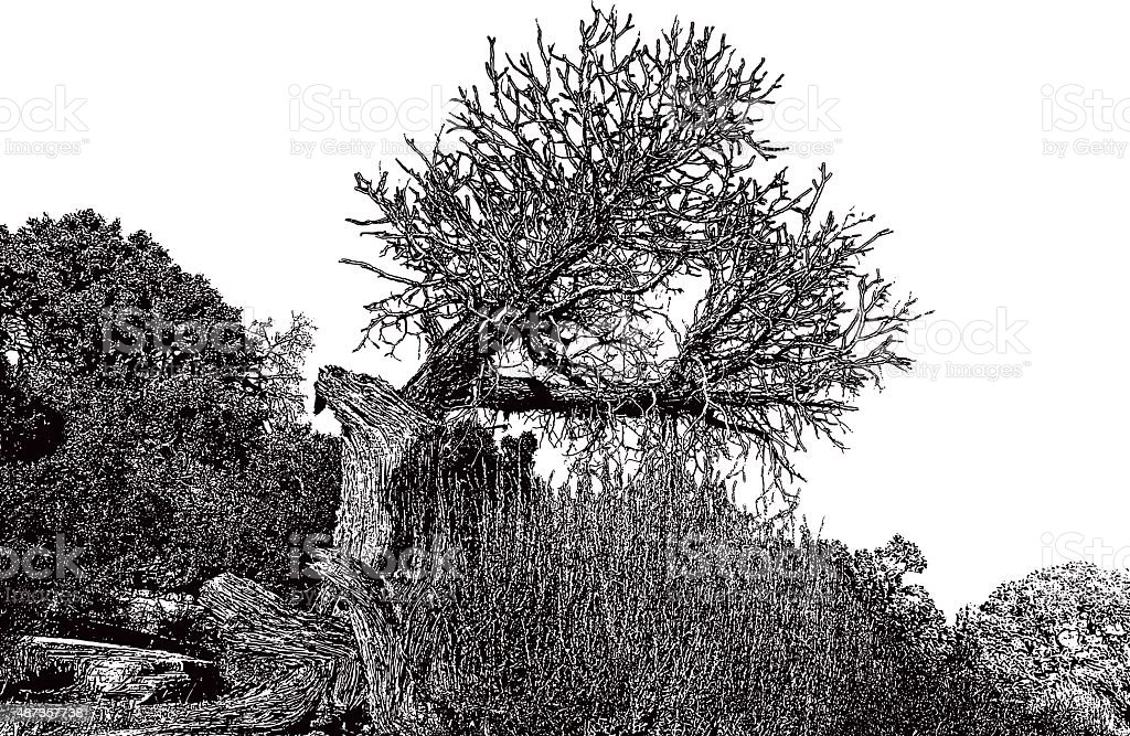 Ancient Juniper Tree in the Southwest USA vector art illustration