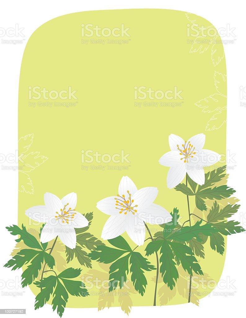 Anemone banner royalty-free stock vector art