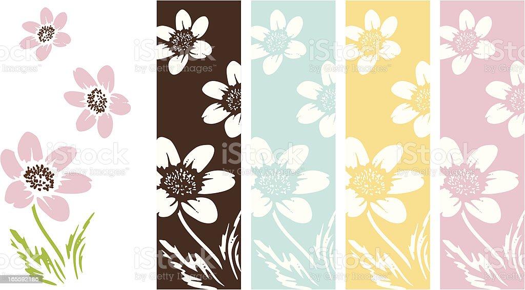 Anemone Flowers vector art illustration