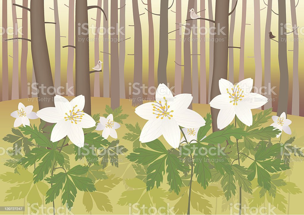 Anemone in a forest royalty-free stock vector art