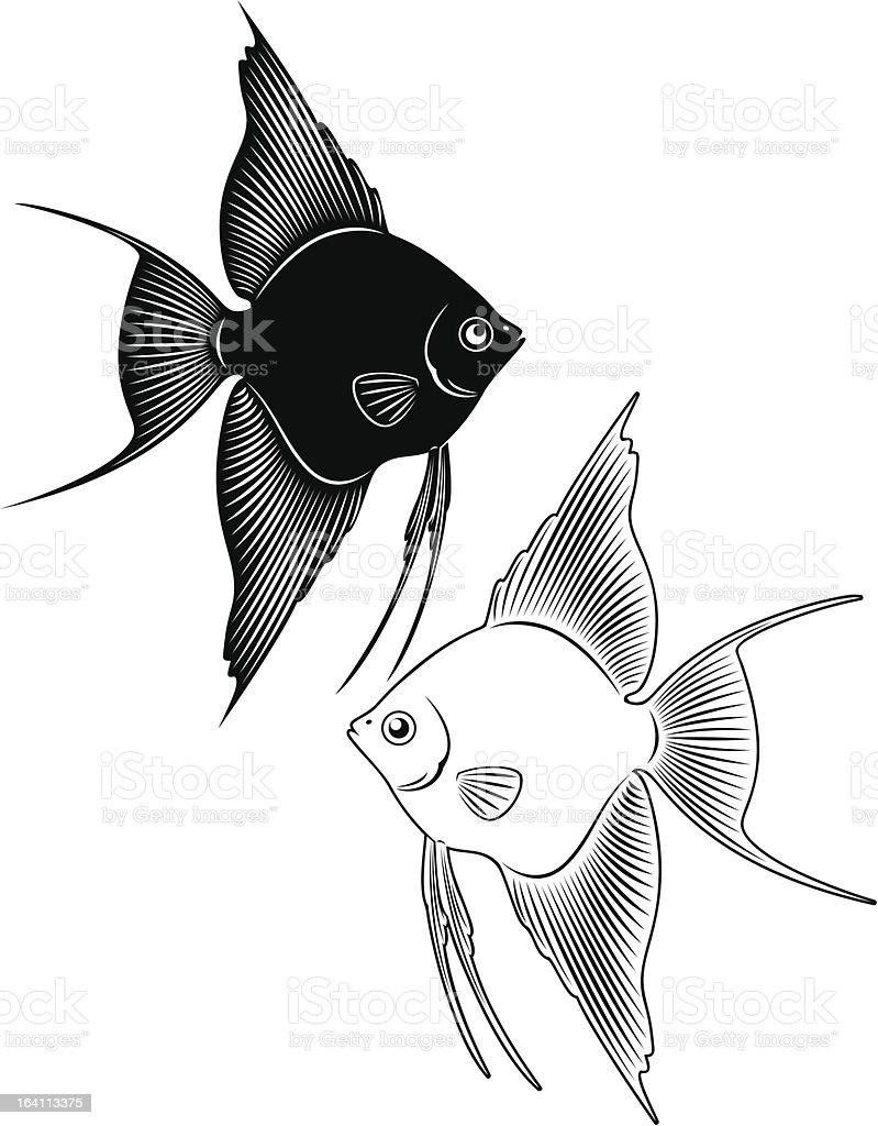 angelfish royalty-free stock vector art