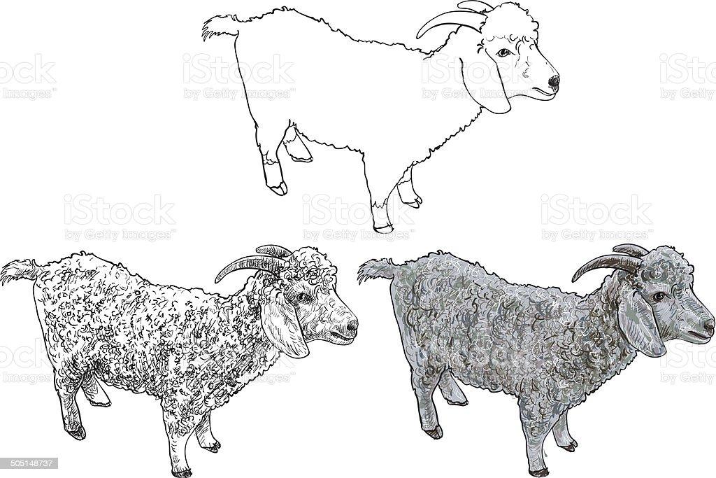 Angora goat-vector vector art illustration