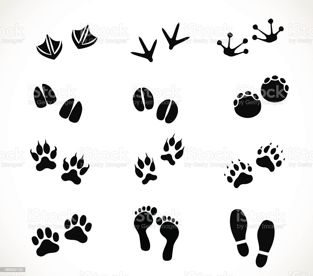 Animal and human paw and footprint set vector vector art illustration