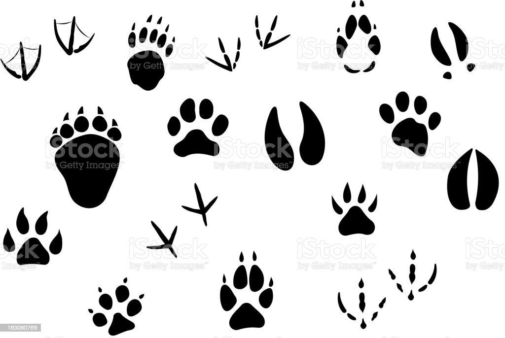 Animal footprints and tracks royalty-free stock vector art
