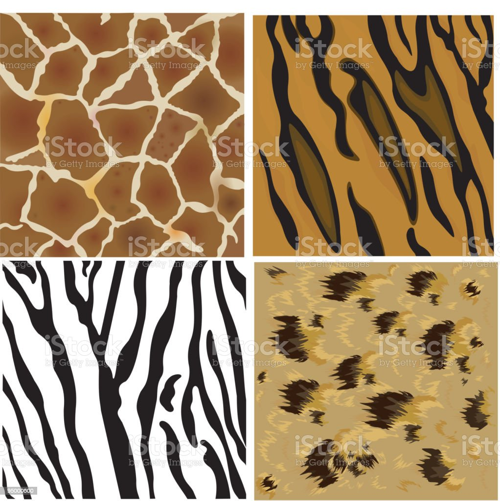 Animal patterns of tiger, leopard, giraffe and zebra. royalty-free stock vector art