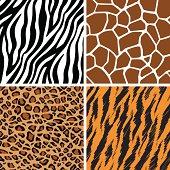 Animal Set - Giraffe, Leopard, Tiger, Zebra Seamless Pattern