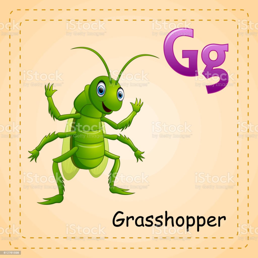 Animals alphabet: G is for Grasshopper vector art illustration