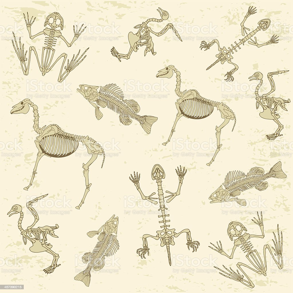 animals anatomy, skeleton pattern vector art illustration