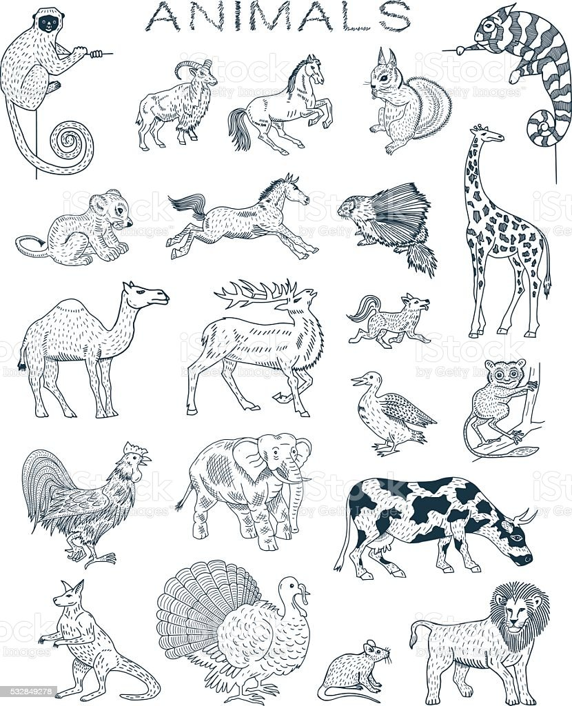 Animals Doodles vector art illustration