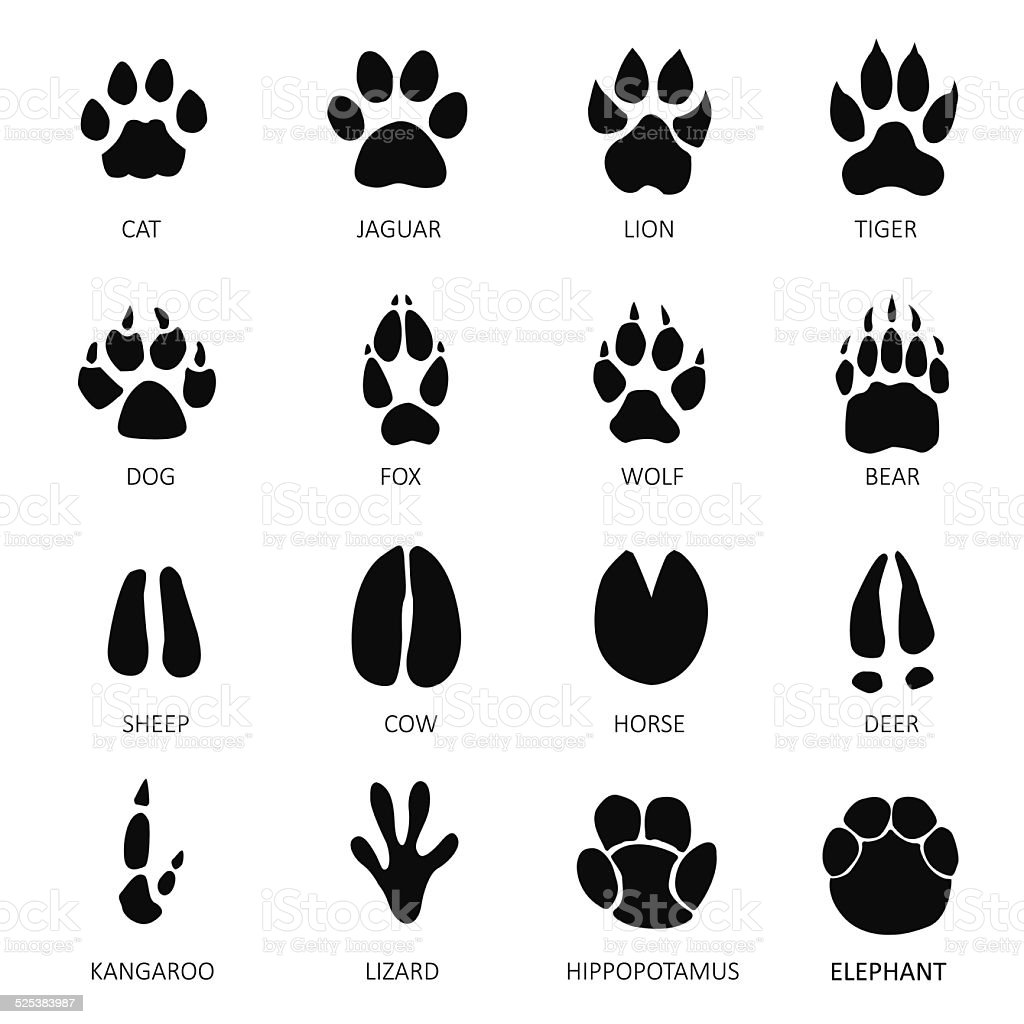 Animals footprints vector art illustration