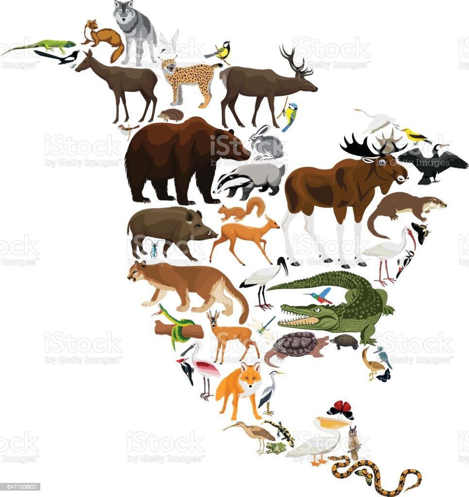 animals North America - vector illustration vector art illustration