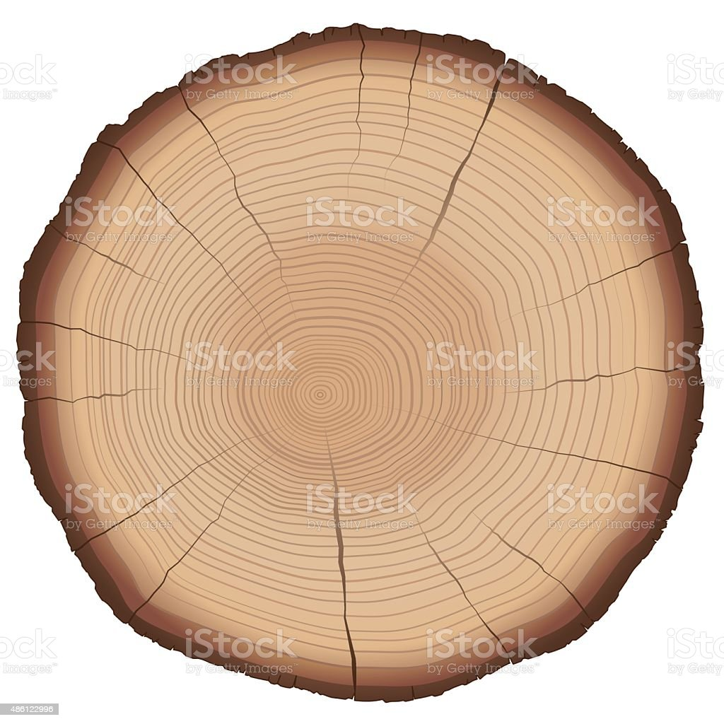 Annual Rings Tree Trunk Cross Section vector art illustration