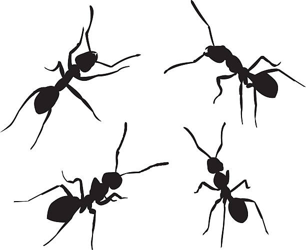 ant clip art vector images illustrations istock