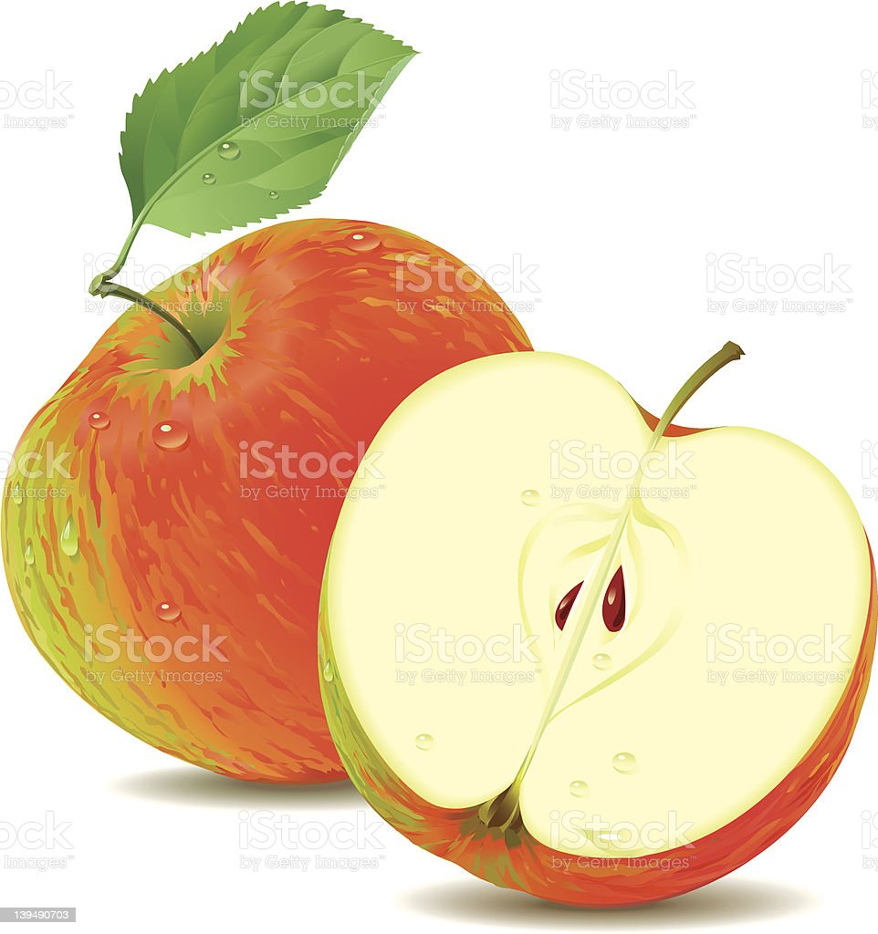 Apple and a half vector art illustration