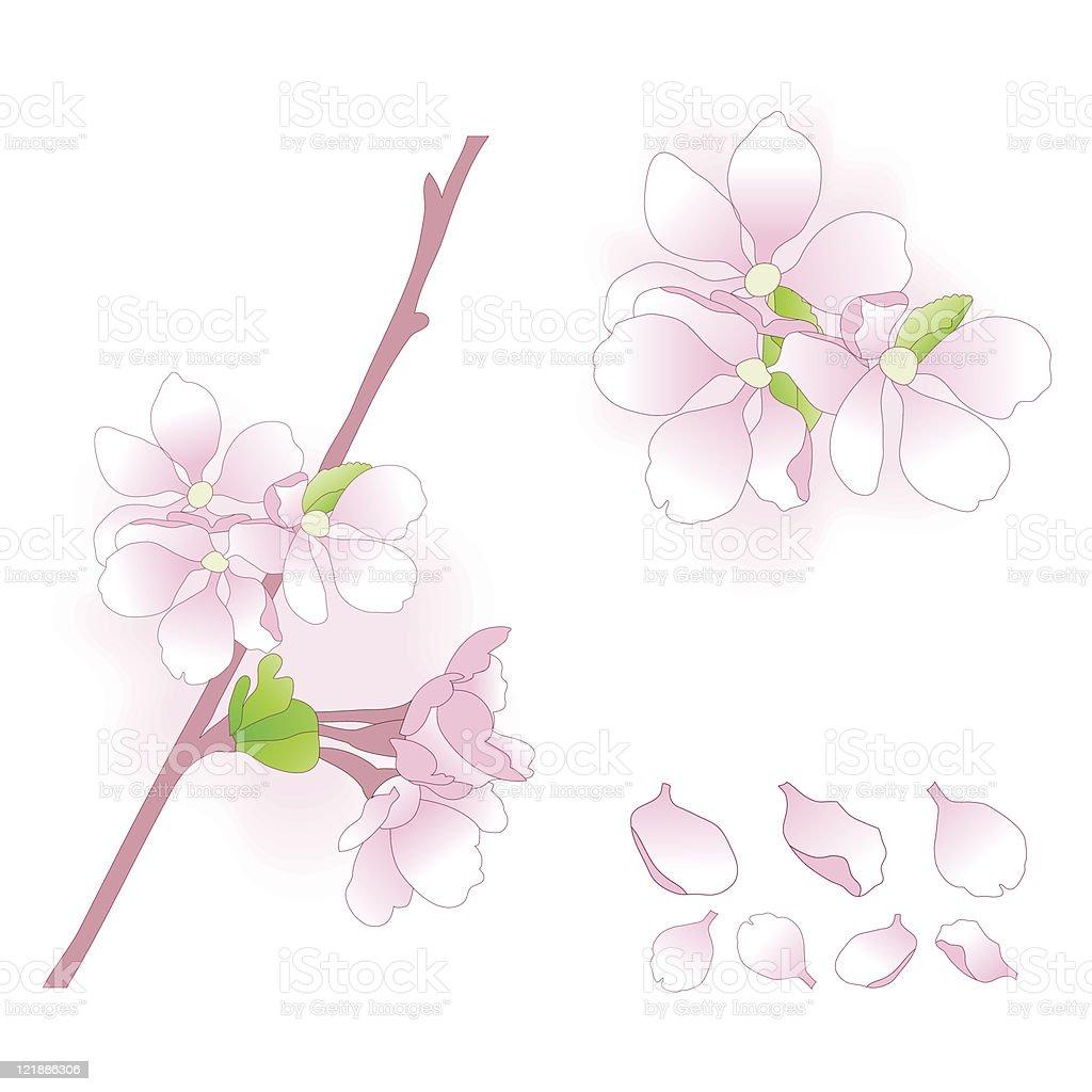 Apple blossom elements set. royalty-free stock vector art
