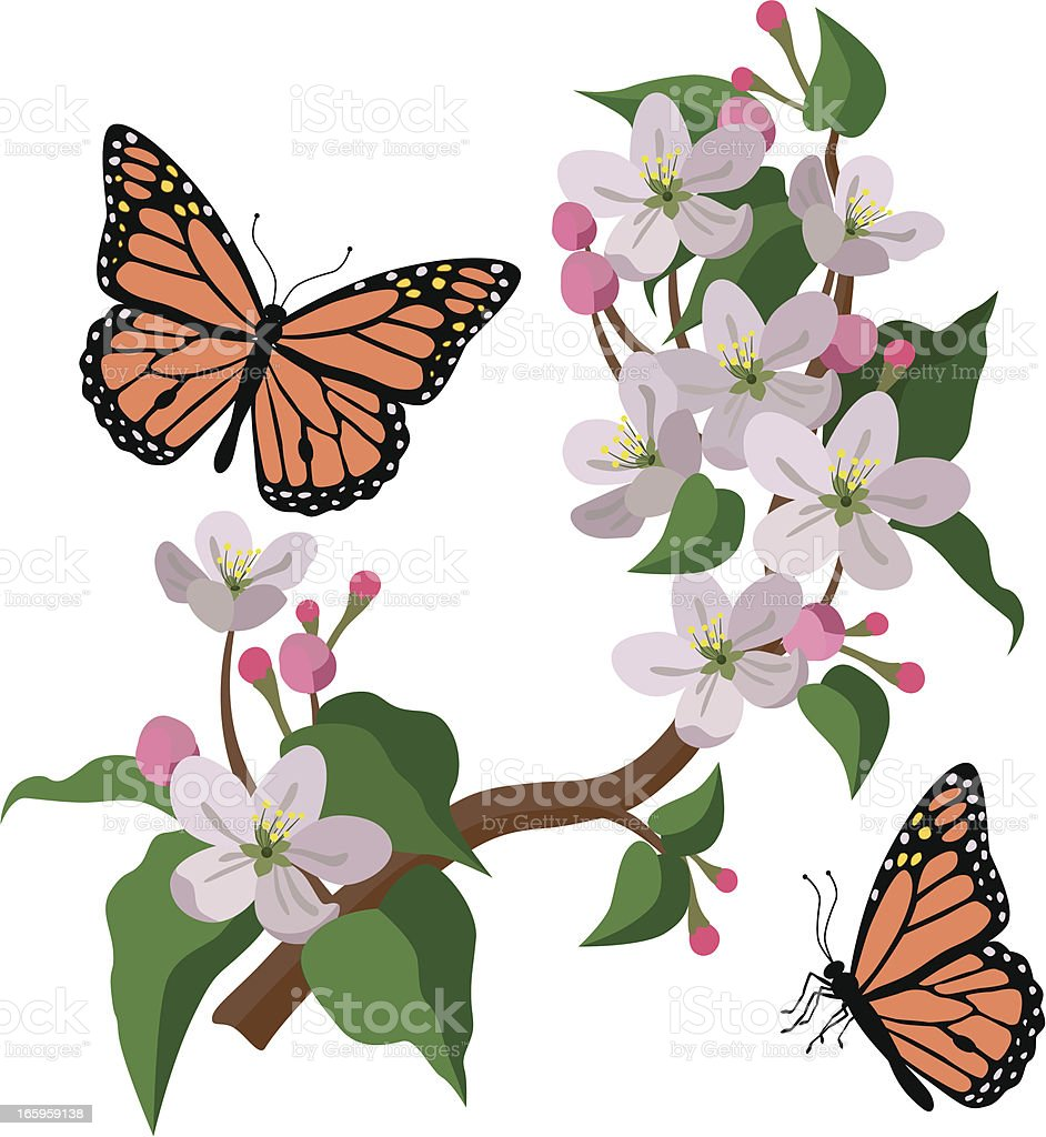 apple blossoms and monarch butterflies royalty-free stock vector art
