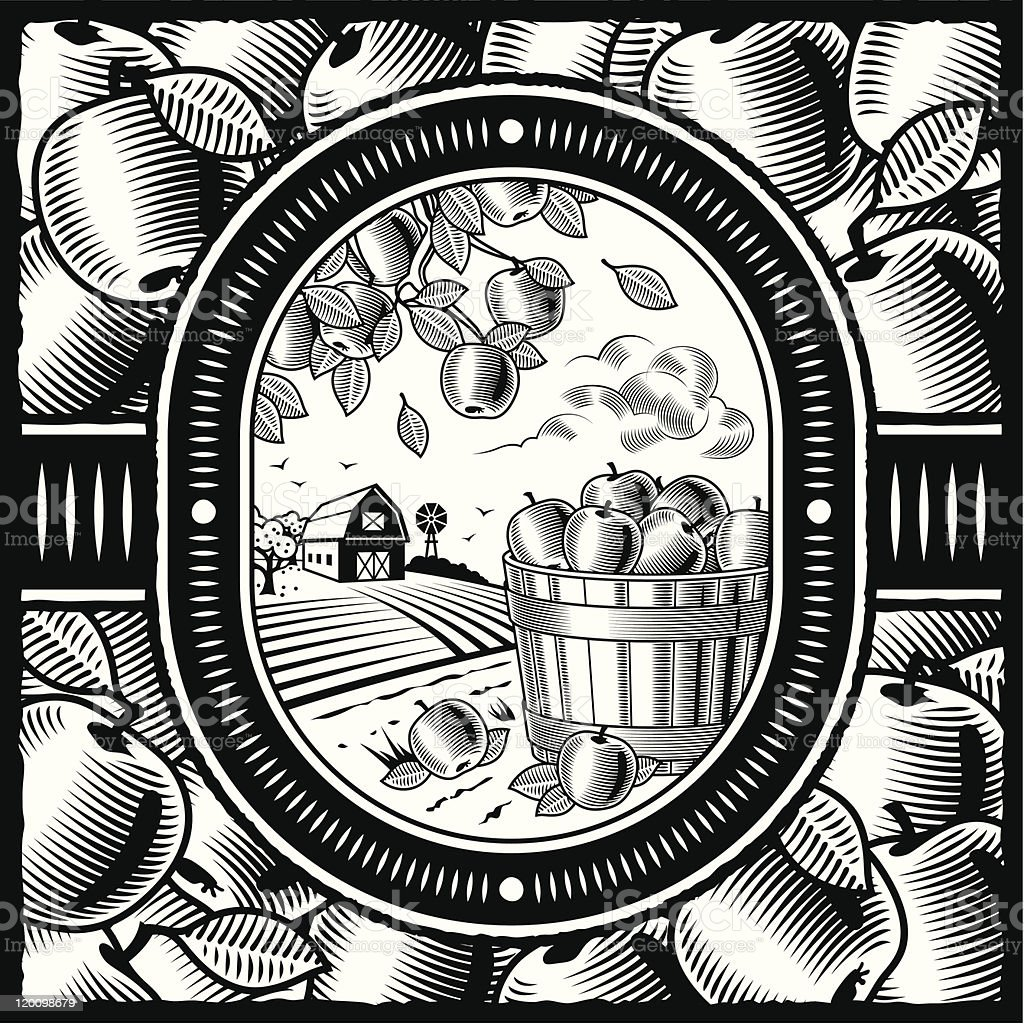 Apple harvest black and white vector art illustration