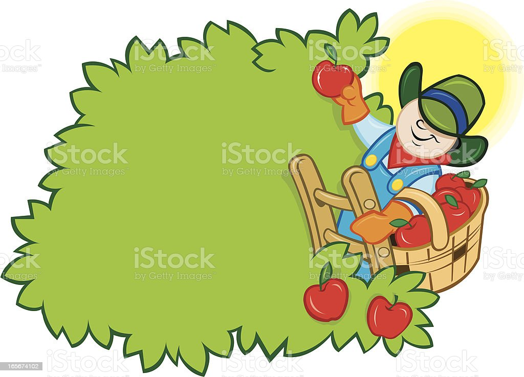 Apple Harvest - Farmer Picking from Tree royalty-free stock vector art
