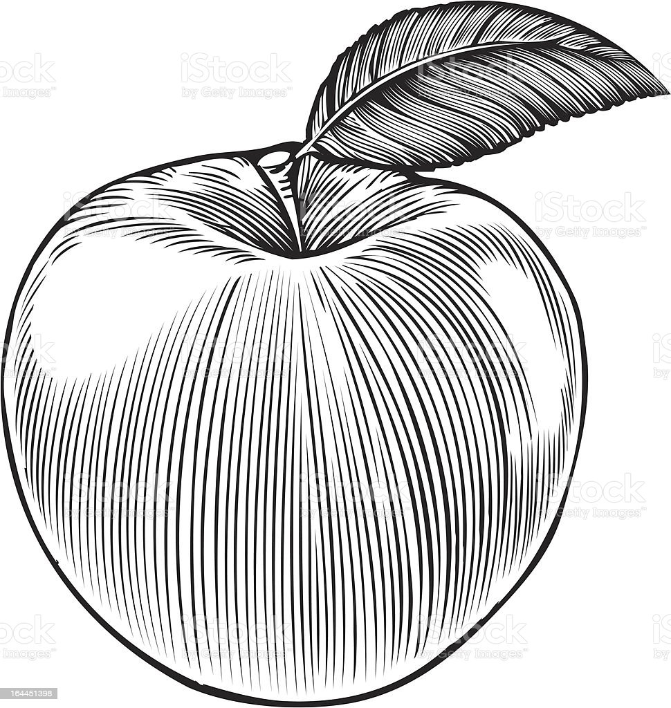 Apple in engraving style royalty-free stock vector art
