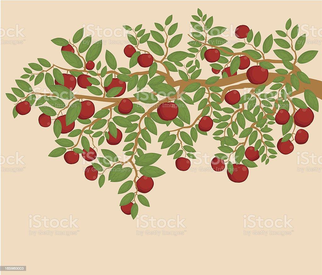 Apple  Tree Branch royalty-free stock vector art