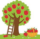 Apple tree harvesting