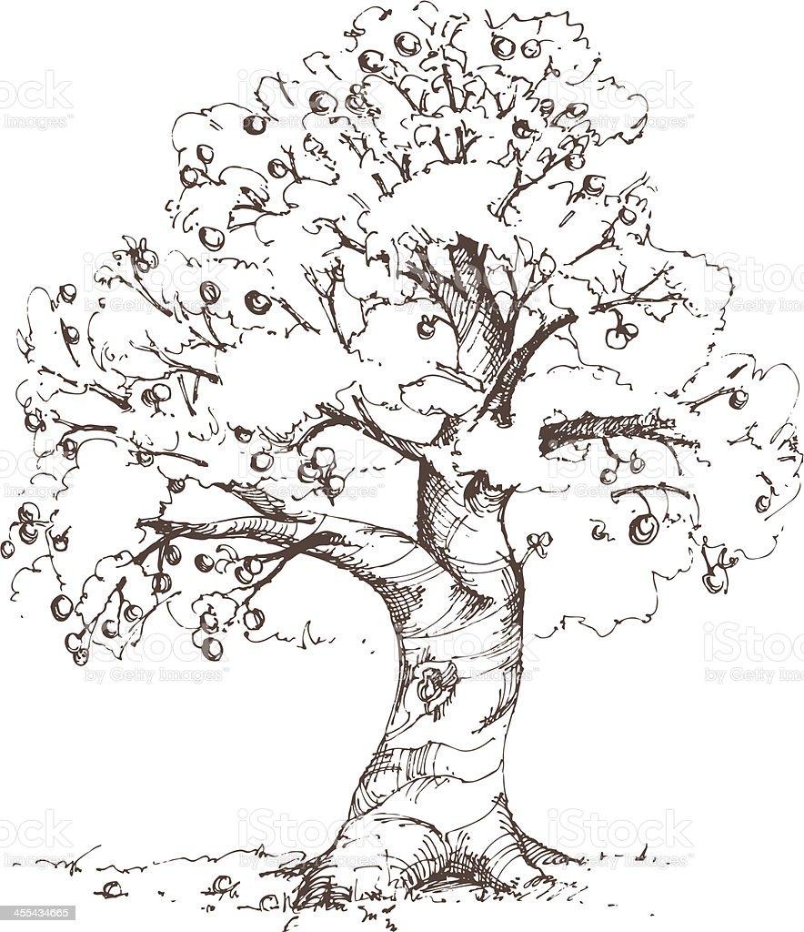 Apple Tree Sketch vector art illustration