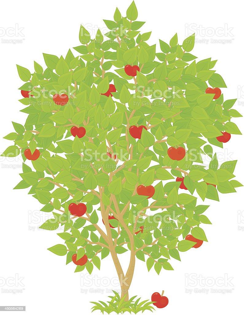 Apple Tree royalty-free stock vector art