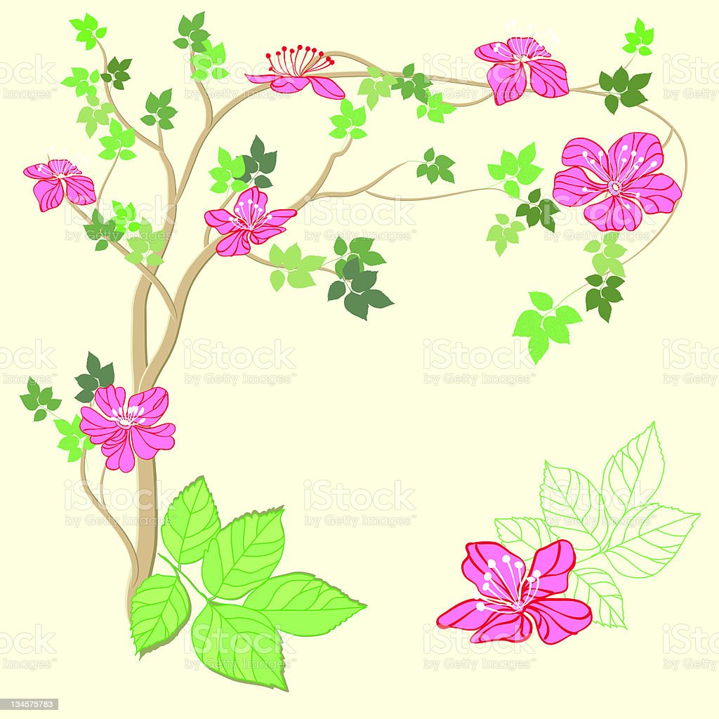 Apple tree with flowers royalty-free stock vector art