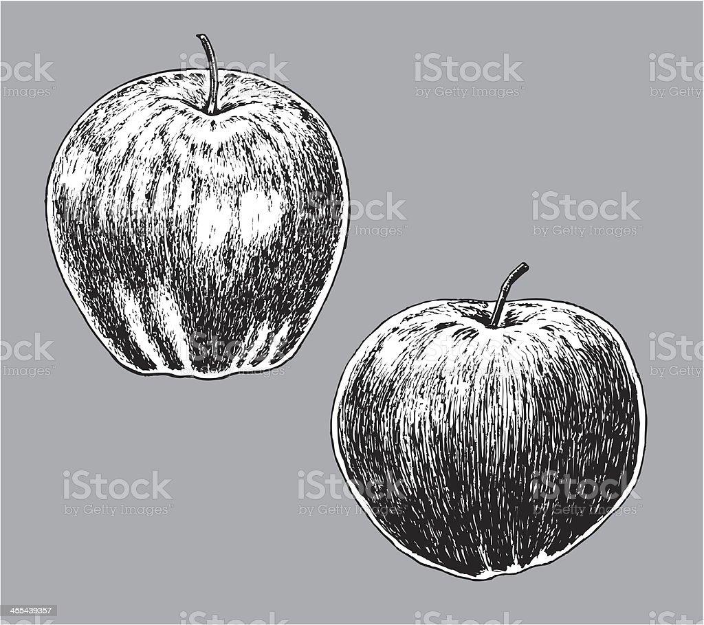 Apples - Macintosh & Golden Delicious royalty-free stock vector art