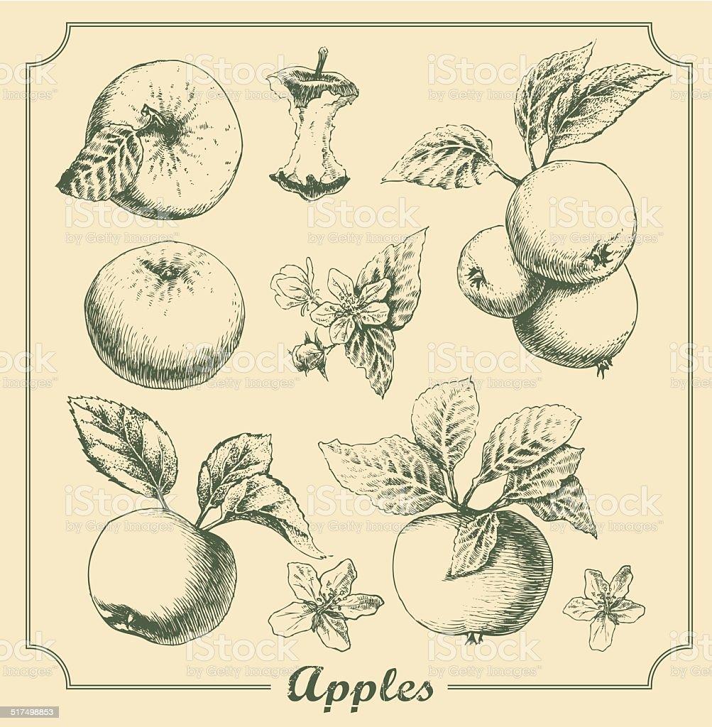 Яблоки stockowa ilustracja wektorowa royalty-free