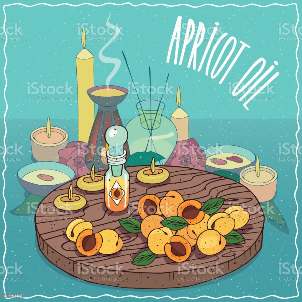 Apricot oil used for aromatherapy vector art illustration