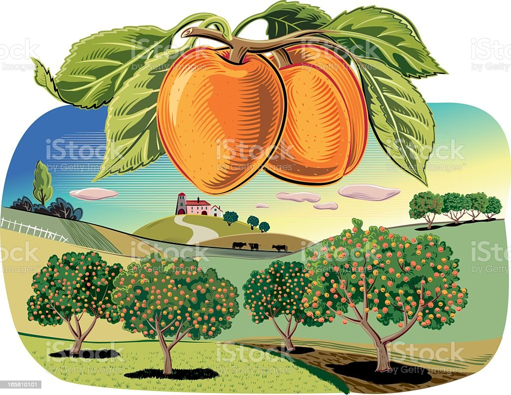Apricot trees in a landscape vector art illustration